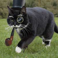Cat tophat pipe walk quite sir