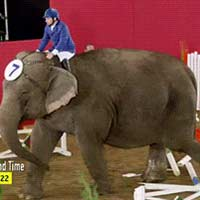 Elephant had enough obstacle