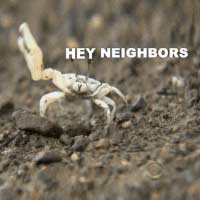 hey-neighbors-crab-wave