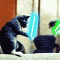 Lightsaber cat fight