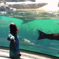 Seal wants to play little girl