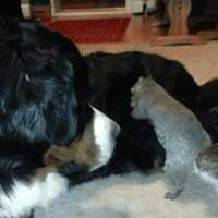 Squirrel hiding nut in dog fur